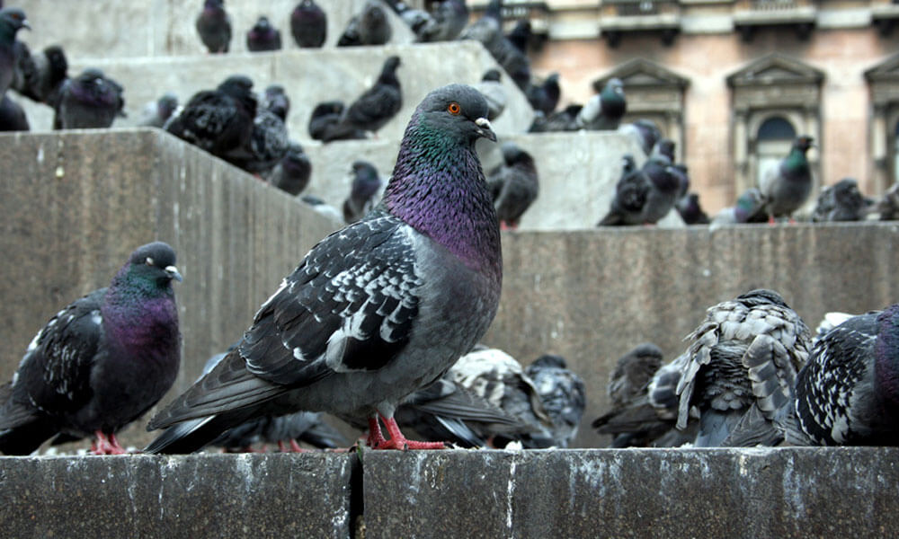 Do You Have Pest Birds On Your Premises?